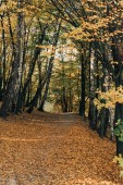 pathway with fallen leaves in peaceful autumn forest