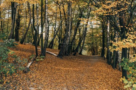 Photo for Fallen leaves on pathway in autumn forest - Royalty Free Image