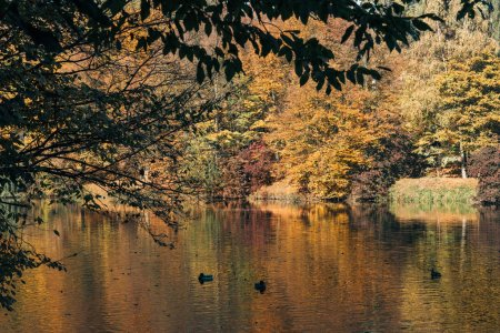 Ducks swimming in lake near autumn forest