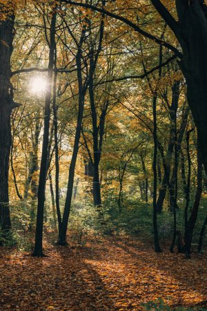 Sunshine in yellow autumn forest with fallen leaves