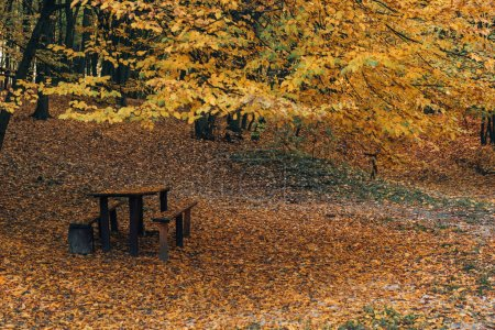 Photo for Wooden benches and table in autumn park - Royalty Free Image