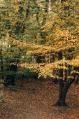 Autumnal trees with yellow and green leaves on twigs in peaceful forest