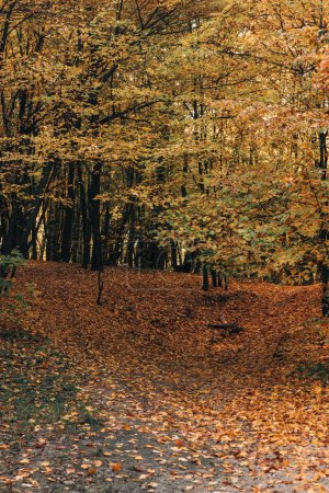Photo for Fallen yellow leaves in autumn park - Royalty Free Image