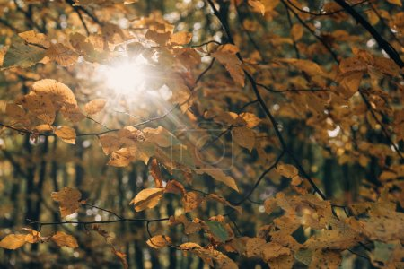 Selective focus of tree branches with sunlight in forest