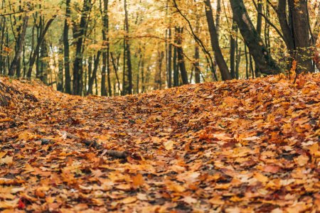 Selective focus of autumn forest with fallen leaves