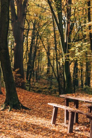 Sunlight on wooden benches and table in autumn forest