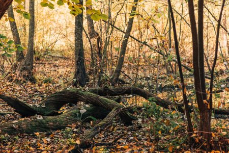 Close up of tree roots in autumn forest