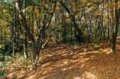 Peaceful autumn forest with fallen leaves