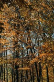 Golden leaves on tree branches in autumn forest