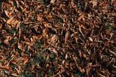 """Постер, картина, фотообои """"Крупным планом сухие коричневые листья на земле"""""""