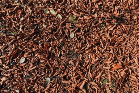 Close up of dry brown leaves on ground