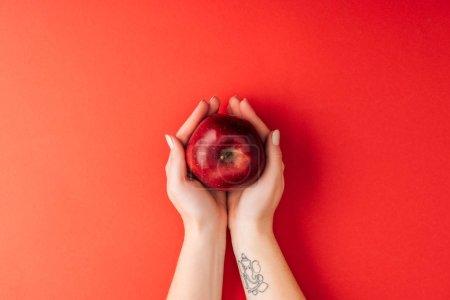 Photo pour Vue du dessus des mains féminines tatouées tenant une grosse pomme mûre sur fond rouge - image libre de droit