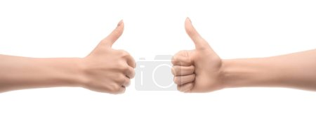 Photo for Cropped view of women showing thumb up signs isolated on white - Royalty Free Image