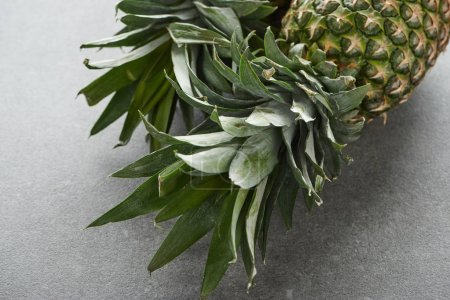 Photo for Close up of green pineapple leaves on grey background - Royalty Free Image