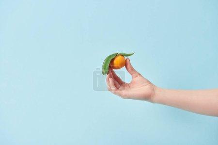 Photo pour Vue recadrée de femme tenant bleu en main isolé sur mandarine bio - image libre de droit