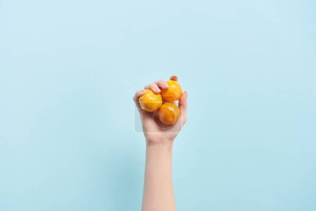 Photo pour Vue recadrée de femme tenant tangerines orange bleu en main isolé sur - image libre de droit