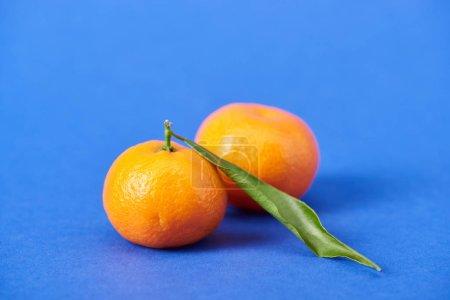 Photo pour Tangerines organiques juteux avec entrain sur fond bleu - image libre de droit