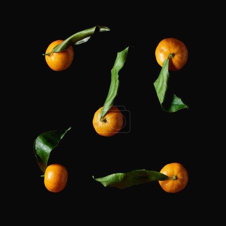 Photo pour Tangerines organiques avec des feuilles vertes isolées sur fond noir - image libre de droit
