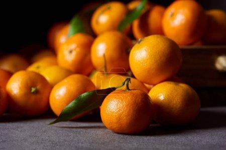 Photo pour Mise au point sélective de délicieuses mandarines orange avec feuilles vertes - image libre de droit