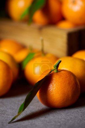 Photo pour Mise au point sélective de Clémentine orange près de mandarines aux feuilles vertes - image libre de droit