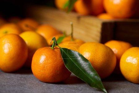 Photo pour Mise au point sélective de Clémentine bio près de mandarines aux feuilles vertes - image libre de droit