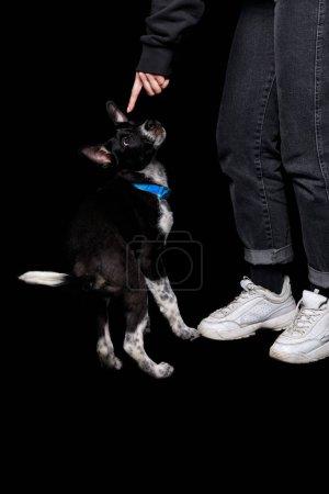 Photo pour Vue recadrée de la femme en jeans pointant avec le doigt à chien bâtard dans le collier sur isolé sur noir - image libre de droit