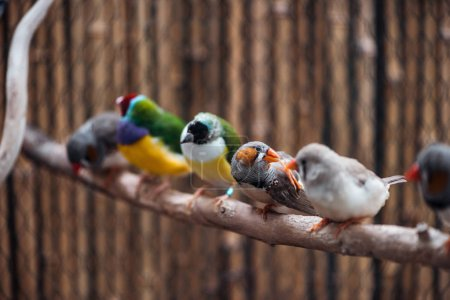 Foto de Enfoque selectivo de coloridas aves exóticas en rama de madera - Imagen libre de derechos