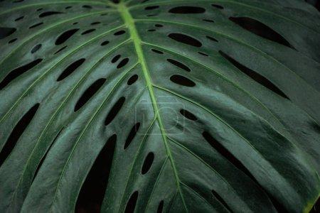 Photo pour Feuille colorée verte de palmier texturée sur le fond noir - image libre de droit