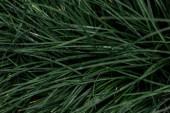 """Постер, картина, фотообои """"top view of fresh green grass with water drops"""""""