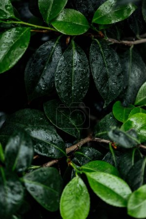 Photo for Close up view of wet green natural leaves on tree branches - Royalty Free Image