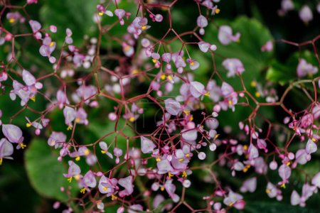 Photo for Close up view of small purple flowers on branches - Royalty Free Image