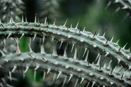 Photo for Close up view of green cacti leaves with needles - Royalty Free Image