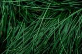 "Постер, картина, фотообои ""top view of fresh green grass with drops"""