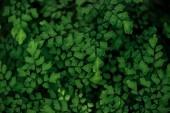 "Постер, картина, фотообои ""green fresh bright textured leaves on branches"""