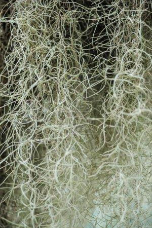Photo pour White curved roots of plant in botanical garden - image libre de droit
