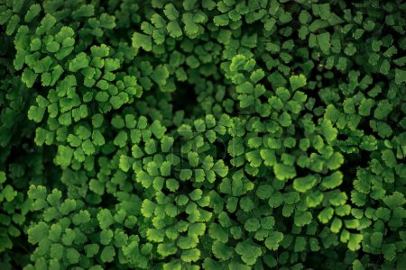 Photo for Top view of green fresh bright textured leaves on branches - Royalty Free Image