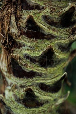 Photo pour Vue rapprochée de l'écorce texturée des arbres recouverte de mousse - image libre de droit