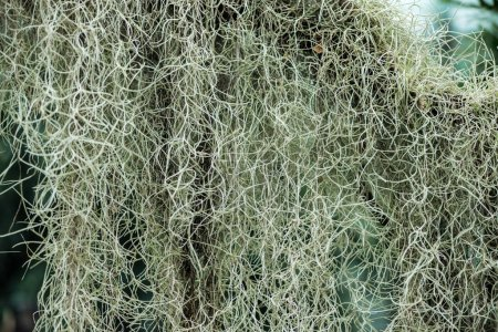 Photo pour White curved roots of plant in botanical garden in daylight - image libre de droit