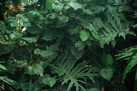 Photo for Green exotic different leaves in botanical garden - Royalty Free Image