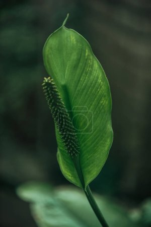 Photo for Close up view of green leaf on blurred background - Royalty Free Image