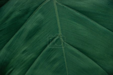 Photo for Close up view of textured green leaf with copy space - Royalty Free Image