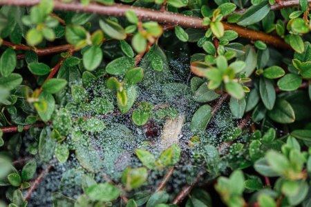 Photo pour Fermer vers le haut de vue des lames vertes fraîches avec des gouttes d'eau sur des branches d'arbre - image libre de droit