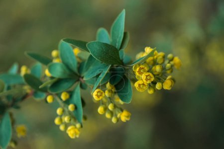Photo for Close up view of bright yellow flowers and green leaves on branch - Royalty Free Image