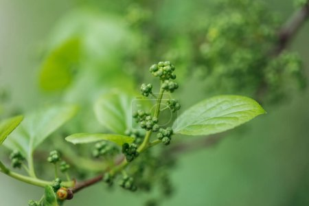 Photo pour Close up view of green spring leaves on tree branch - image libre de droit