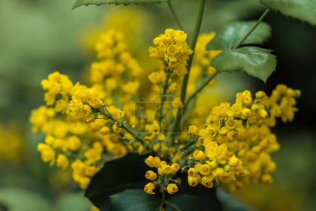 Photo pour Close up view of colorful yellow bright flowers and green leaves - image libre de droit