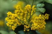 "Постер, картина, фотообои ""close up view of colorful yellow bright flowers and green leaves"""