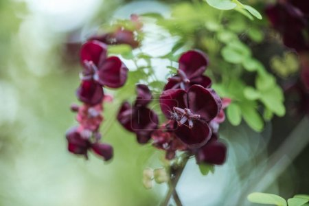 Photo for Close up view of purple flowers on blurred background - Royalty Free Image