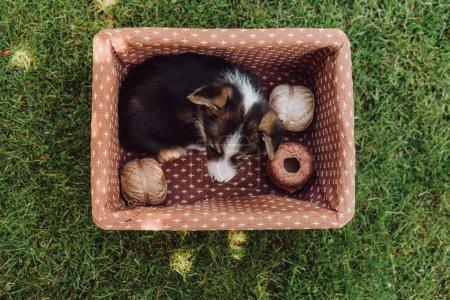 Photo pour Vue du dessus de adorable chiot mignon en boîte avec des bobines de fil dans le jardin d'été vert - image libre de droit