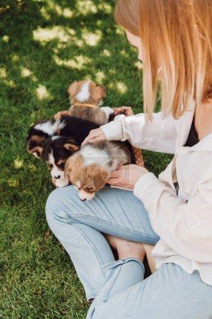 Foto de Vista aérea de la chica rubia sentada en el jardín verde cerca de la caja de mimbre con adorables cachorros - Imagen libre de derechos