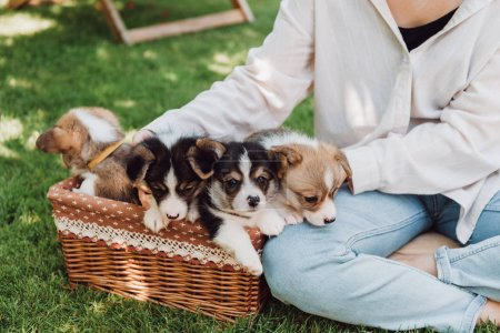 Photo for Cropped view of girl sitting in green garden with crossed legs near wicker box with adorable puppies - Royalty Free Image